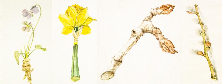 Botanische Illustration im studio linea